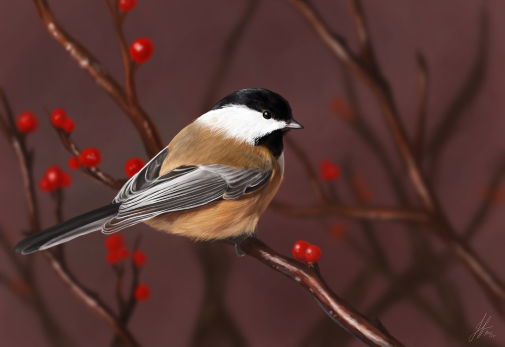 chickadee copy.jpg