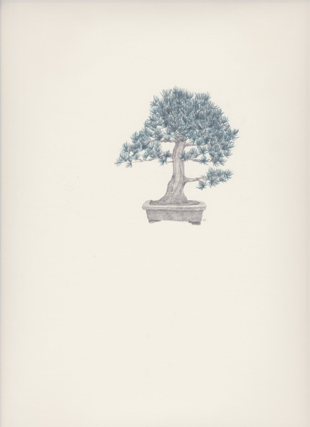 "Bonsai 5 盆栽 5 2013 pencil on paper 纸上铅笔素描 13.6 x 10.6 "" (34.5 x 26.9 cm)"