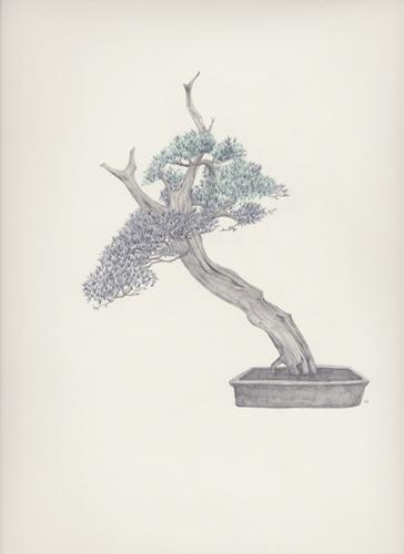 "Bonsai 2 盆栽 2 2013 pencil on paper 纸上铅笔素描 13.6 x 10.6 "" (34.5 x 26.9 cm)"