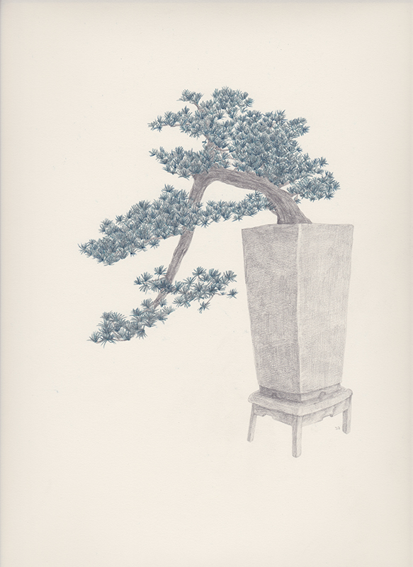 "Bonsai 3 盆栽 3 2013 pencil on paper 纸上铅笔素描 13.6 x 10.6 "" (34.5 x 26.9 cm)"