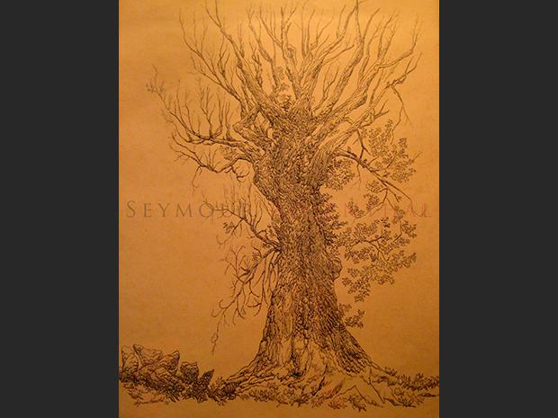 Study of a Tree 1961 I