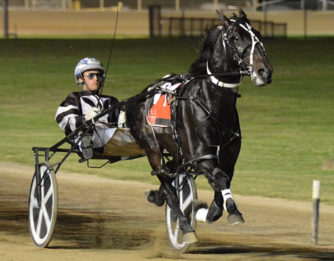 TIGER TARA - Image COURTESY OF HARNESS RACING NSW