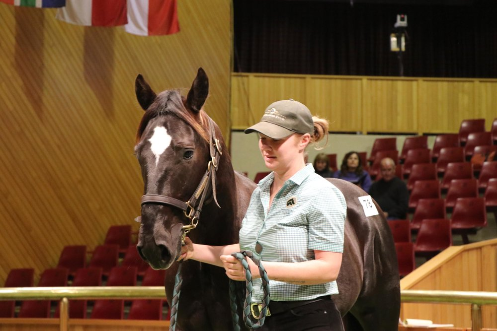 A SWEET LOU YEARLING COLT OUT OF pacING DELIGHT WHO SOLD TO JEAN FEISS AT THE RECENT ALL AGE SALE FOR $150,000