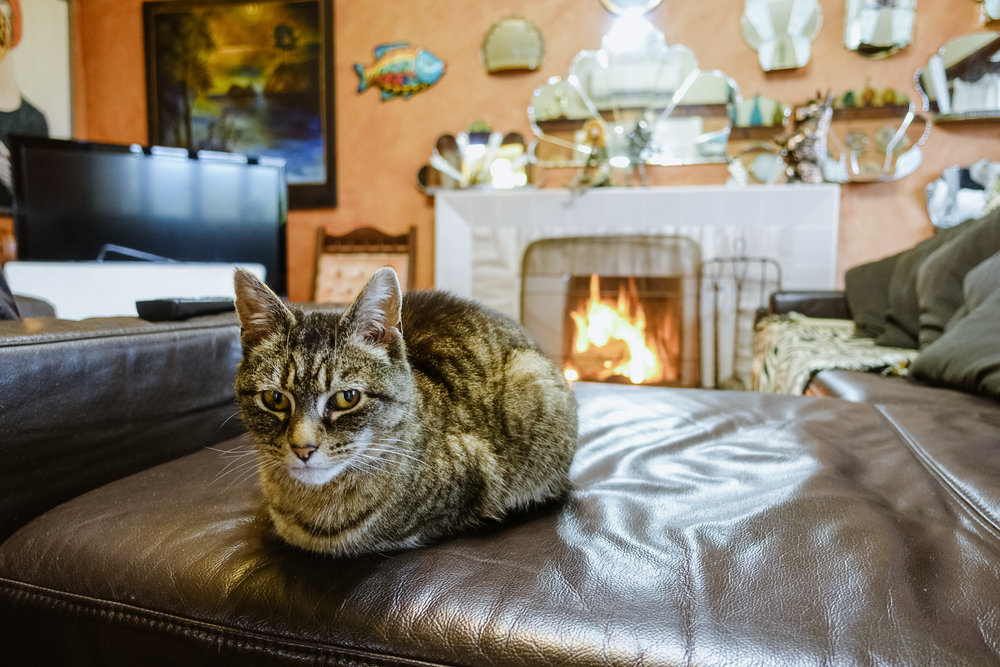 Tweety, the cat, loves the cozy, warm fire at Arden Street House.