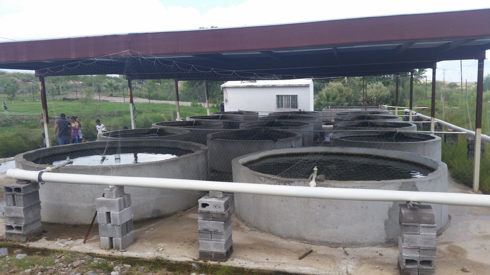 Aquaculture, Chihuahua Mexico