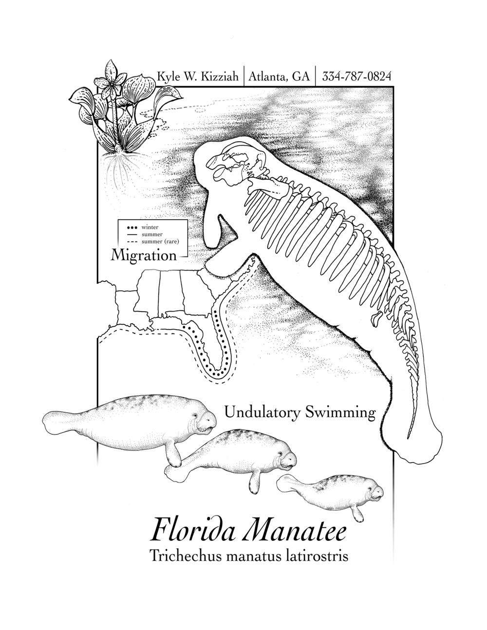 "Promotional Page ""Florida Manatee"", 2016"