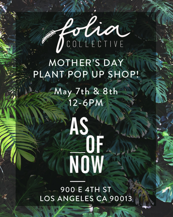 Folia-Collective-As-Of-Now-Pop-Up