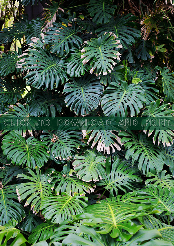 Folia-Collective-Printable-Monstera-Download.jpg
