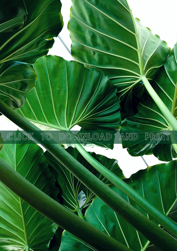 Folia-Collective-Printable-Philodendron-Download.jpg