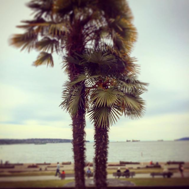 #englishbay #palmtrees #vancouver #hasselnuts  #badadscameras
