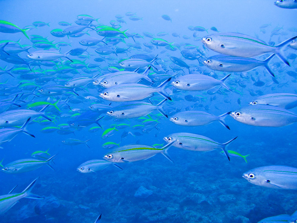 blufish.jpg