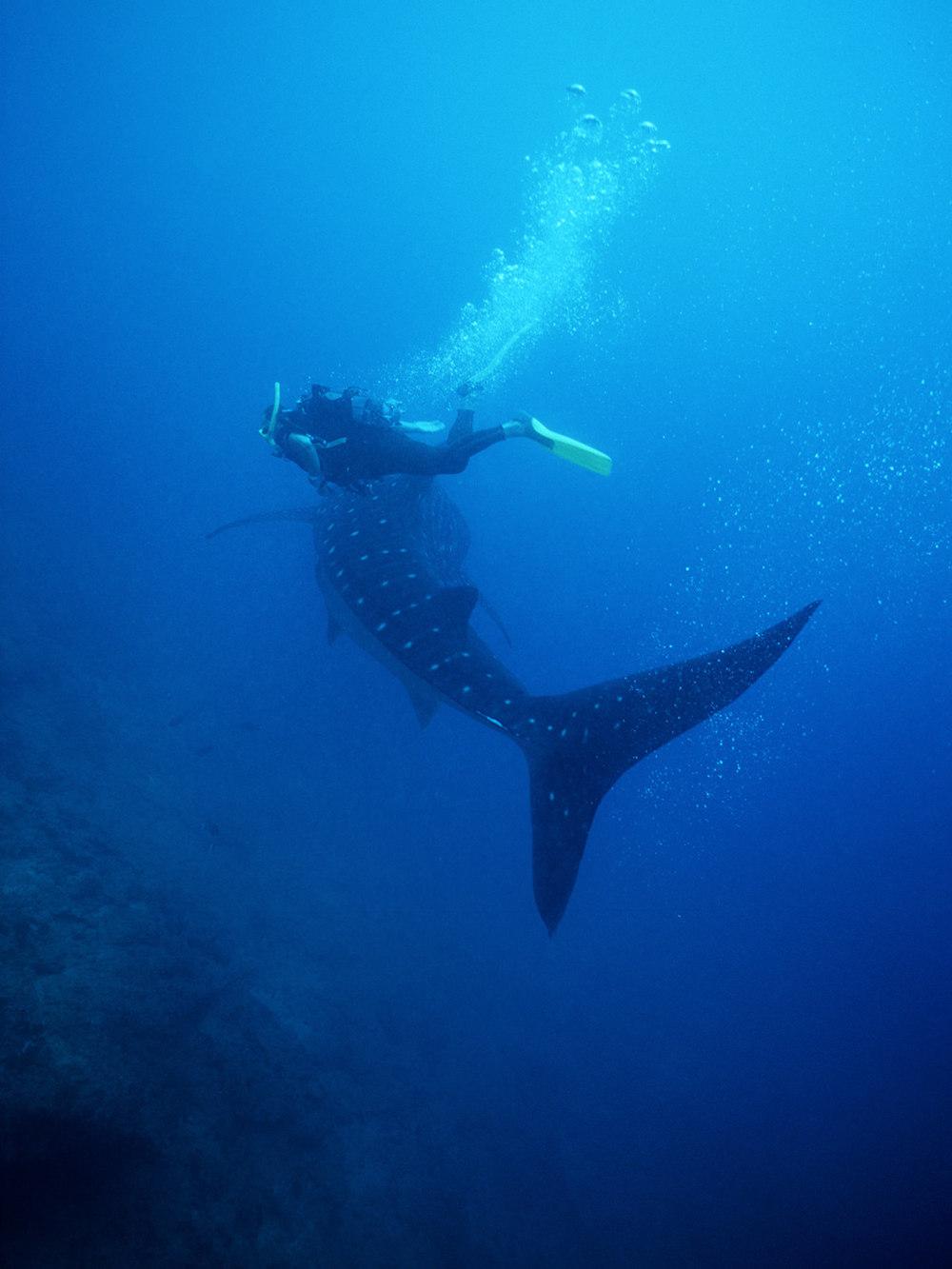 whales_3.jpg
