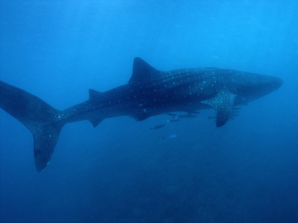 whales_2.jpg