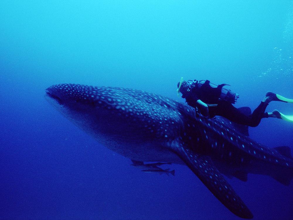 whales_5.jpg