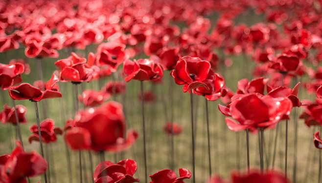 Each poppy in memory of a soldier lost..