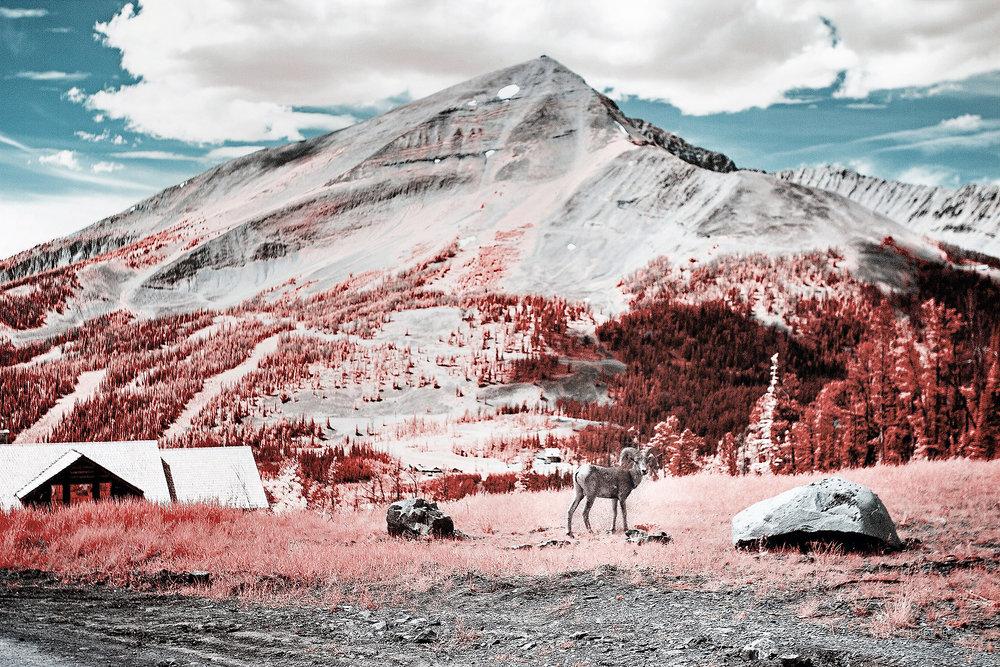 Lone Peak Ram, 2018 Color Infrared