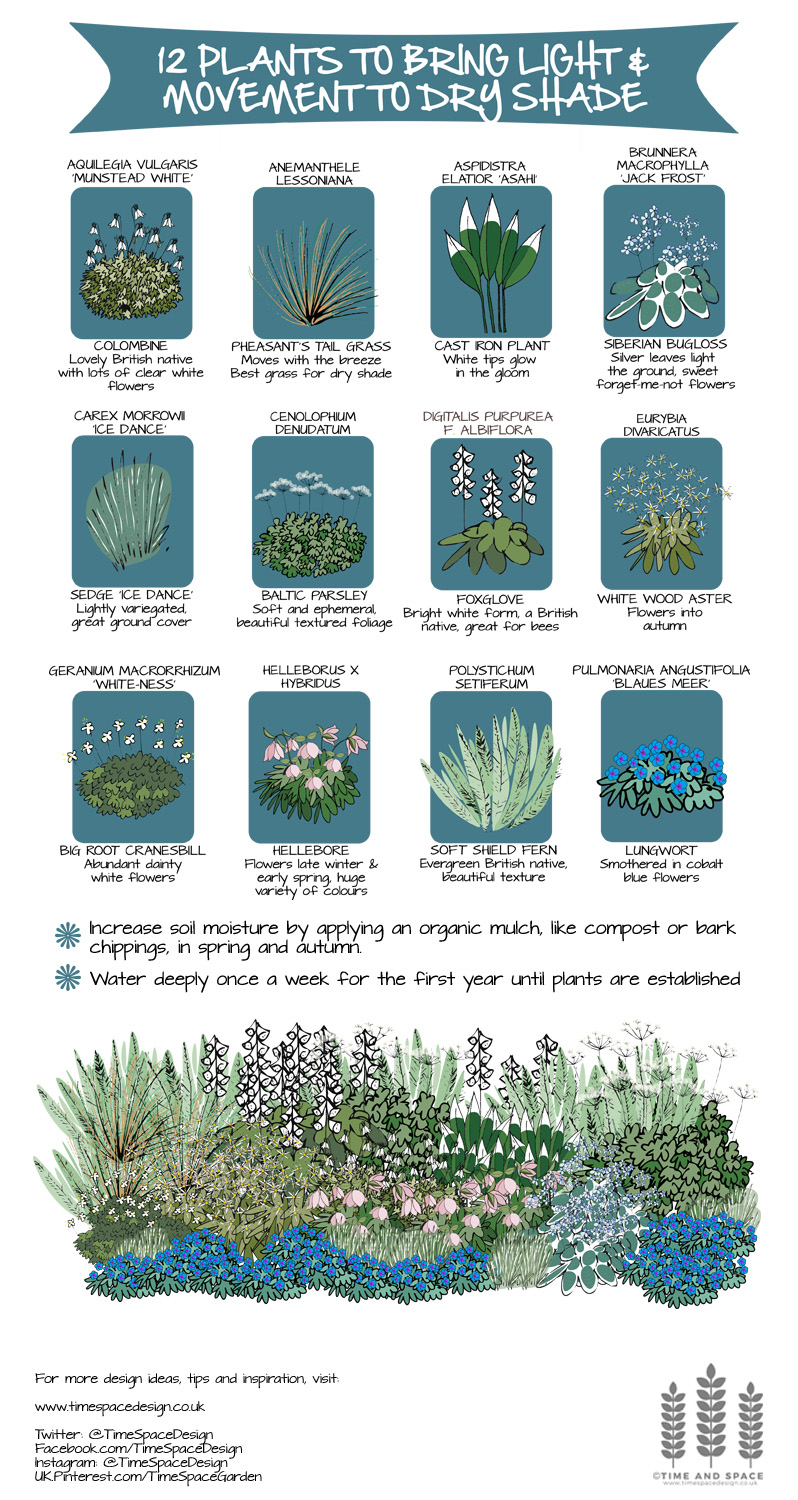 12 Plants to Bring Light and Movement to Dry Shade
