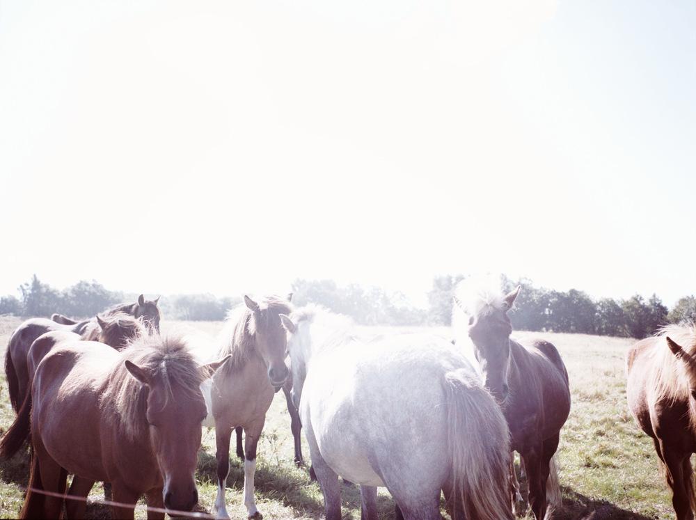 horses-field--500.jpg