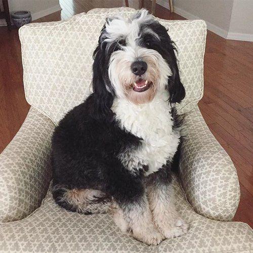 KerrySpearsInteriors-Pets2