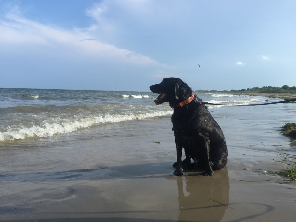 Camber at one of his favorite places, the beach!