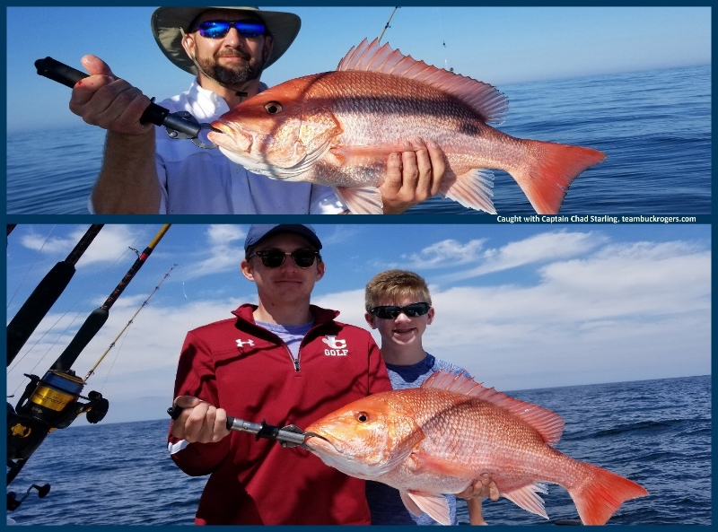 red snapper catches offshore