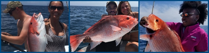 Cpt Starling Red Snapper catches