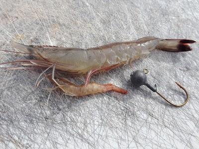 shrimp bait