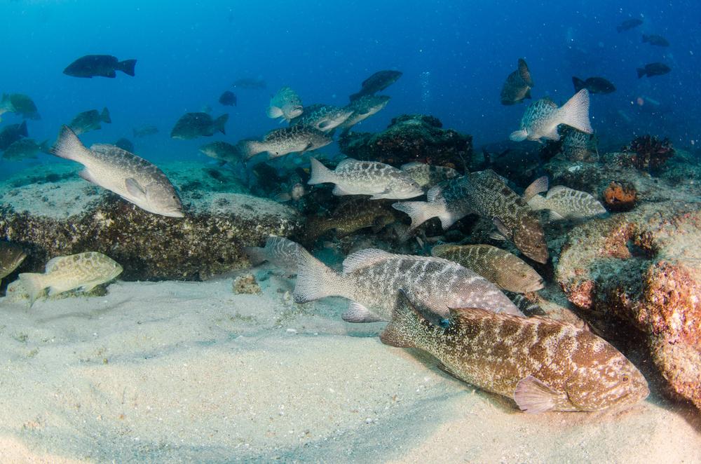 Saltwater fish feeding on a reef