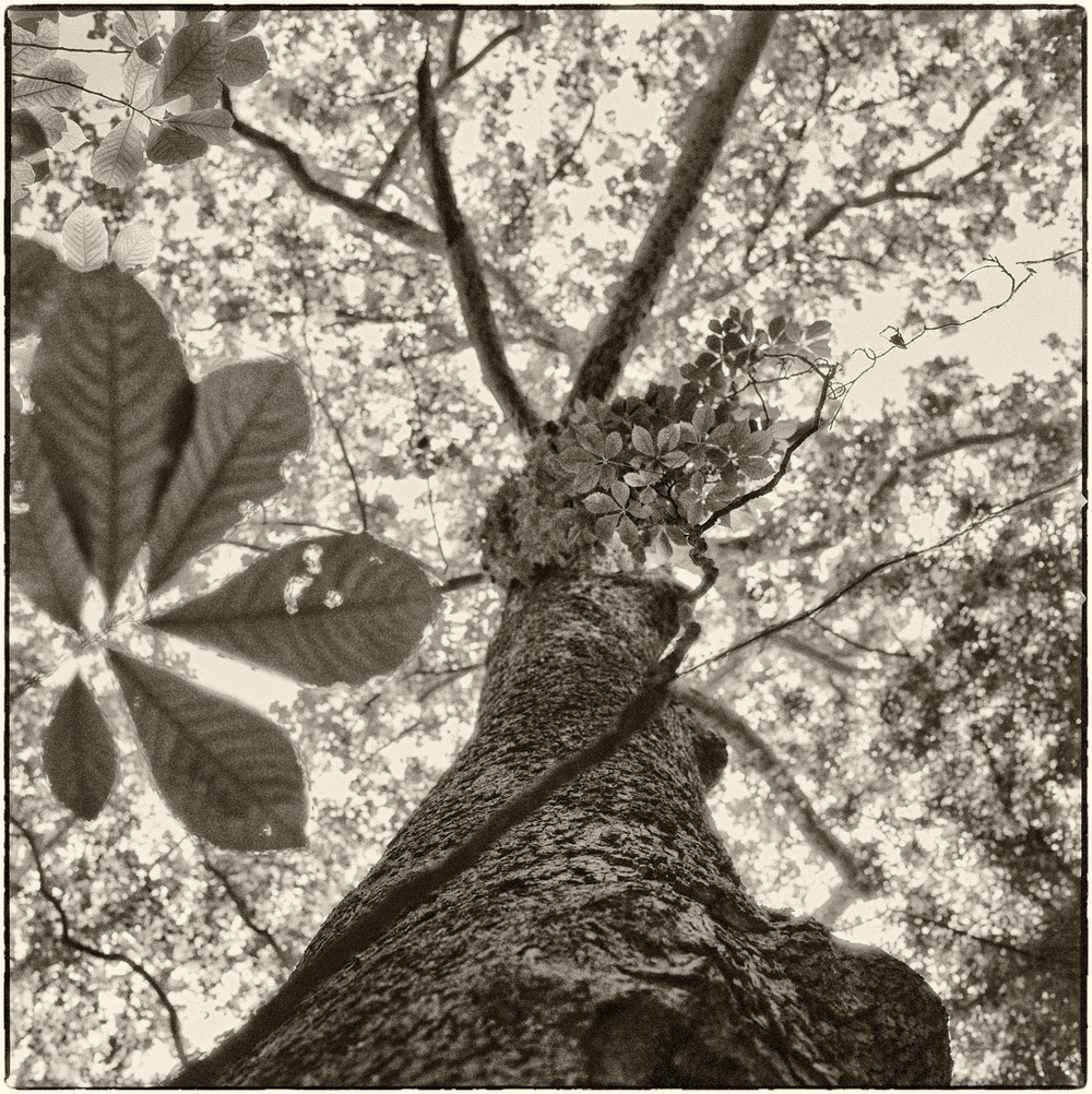 TREE_PATA_IL32_050014_01_EMAIL.jpg