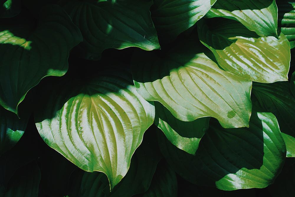 lilla_fekete_ green_variation3.jpg