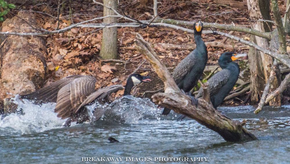 Burke Lake Park 2017-03-29 v-9.jpg