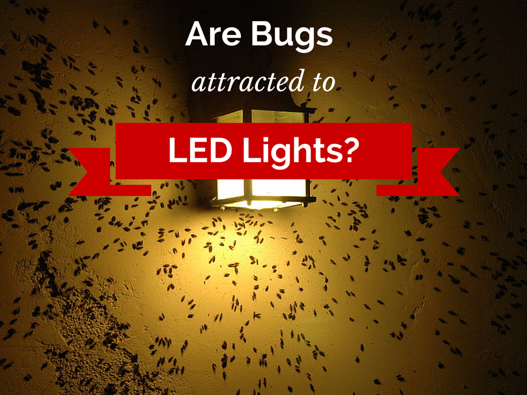 pill bugs attraction to colored lights