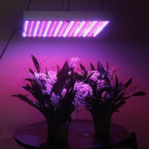 Led_grown_lights_useful.jpg