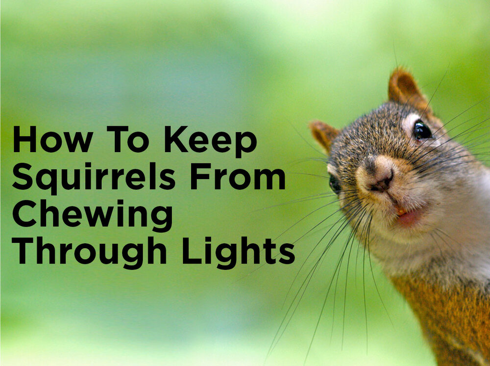 How To Keep Squirrels From Chewing Through Rope Light And String