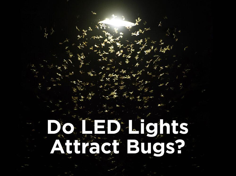 Do Led Lights Attract Bugs 1000bulbs Com Blog