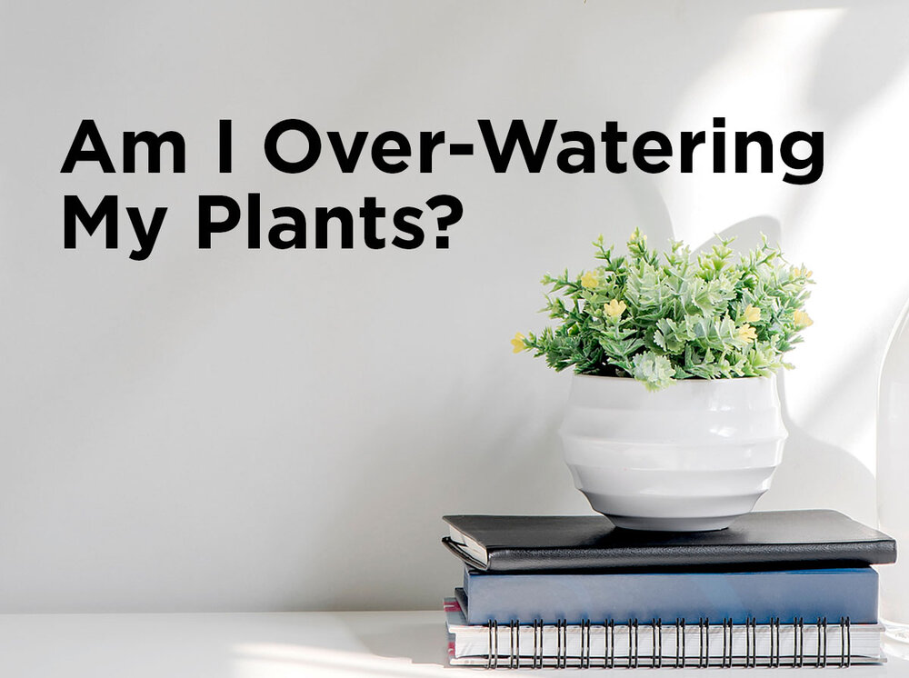 Am i over watering my plants blog for Plant waterer