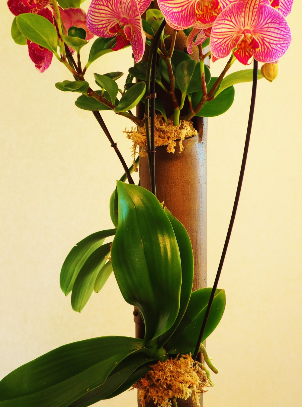 AergrowAntiqueCopperPostwithOrchids.JPG