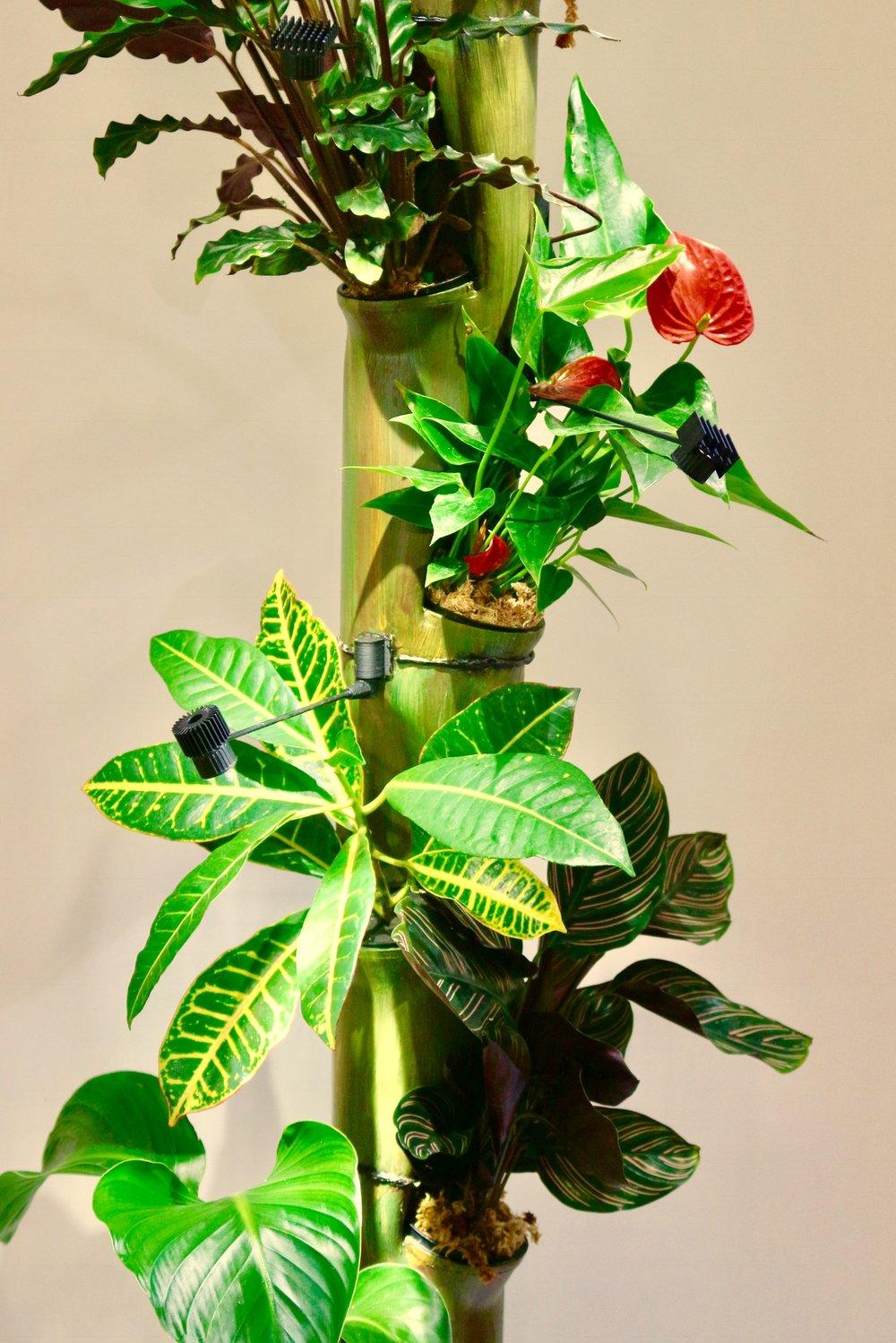 Anthurium,Croton.jpg