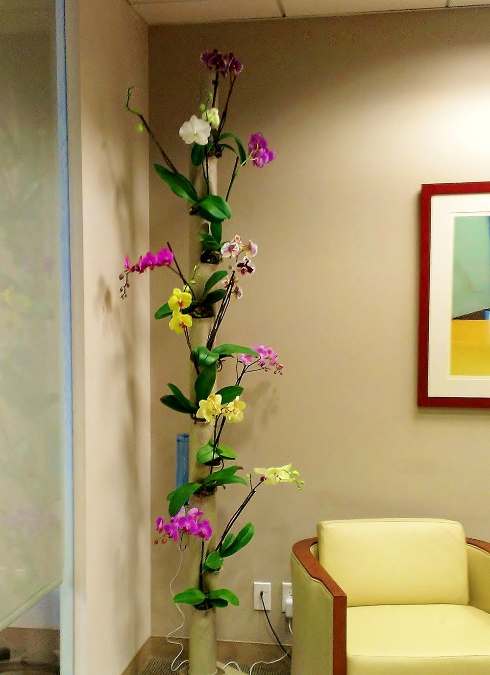Orchids in Law Offices.jpg