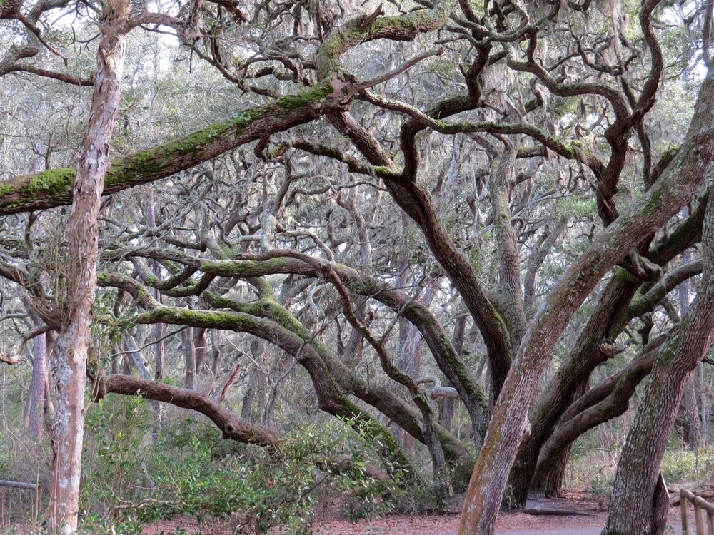 The Live Oaks create an almost eerie feel