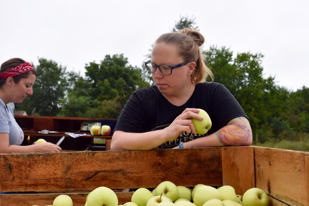 Cidermaker Courtney Strahan (foreground) and QC Lab & Research Analyst Tara Gillies (background) sample a crate of Goldens.