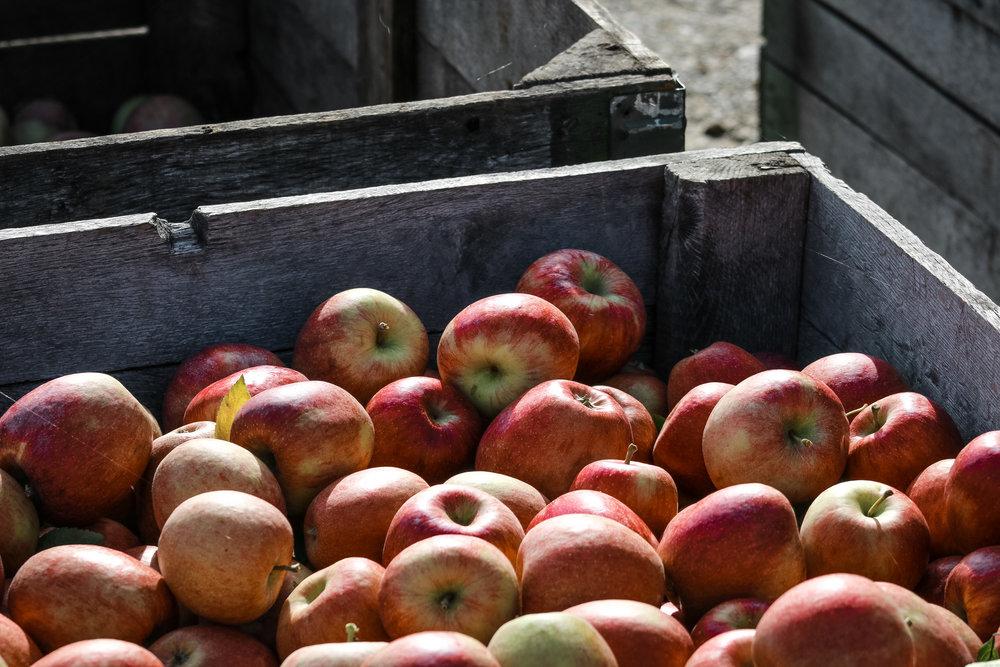 heritage orchards-7.jpg