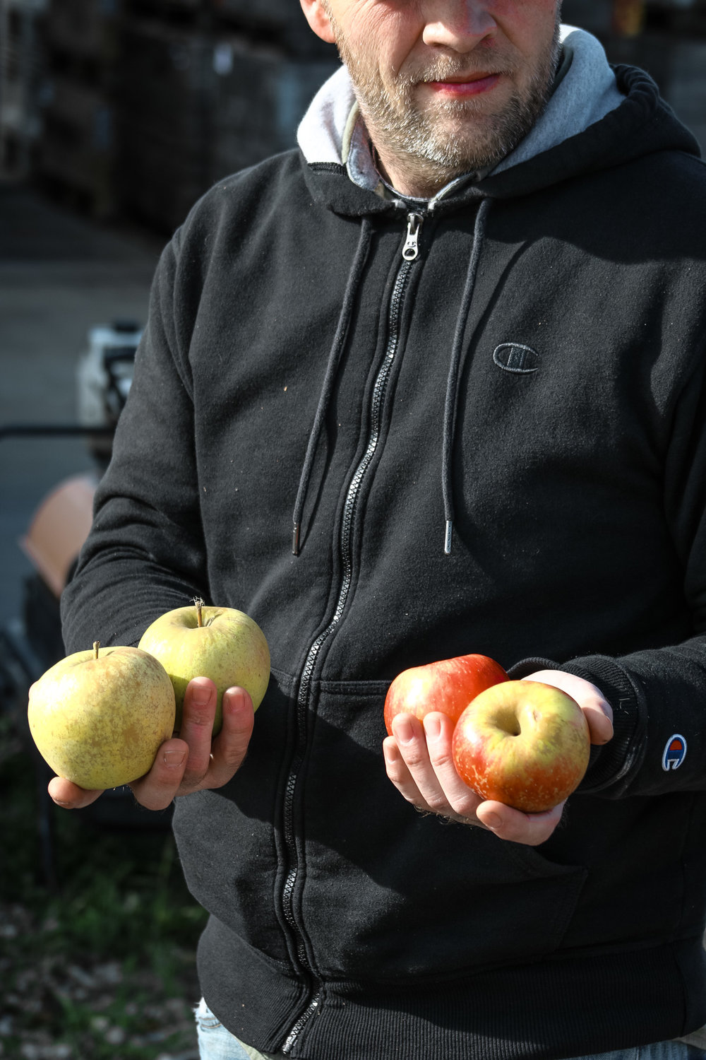 Cidermaker David Crawford holds Suncrisp apples in his right hand, and Swiss Gourmet in his right.