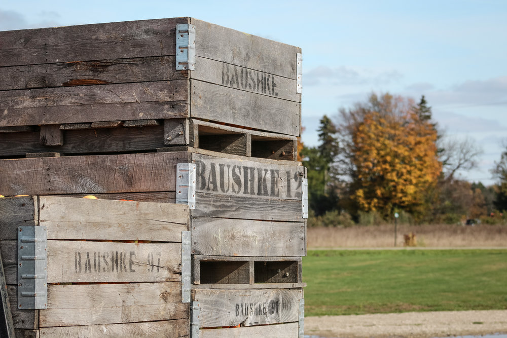 Apples crates stacked among the Michigan fall foliage.