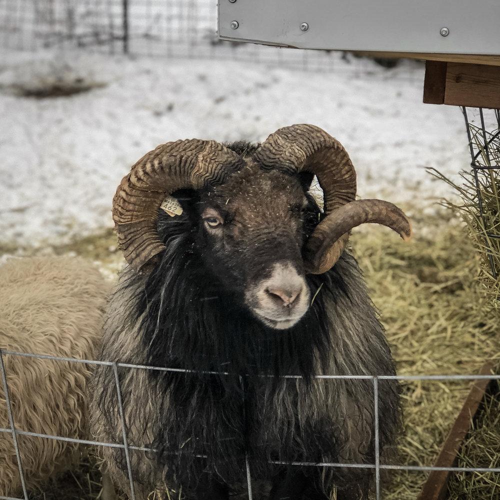 winter animals-3.jpg