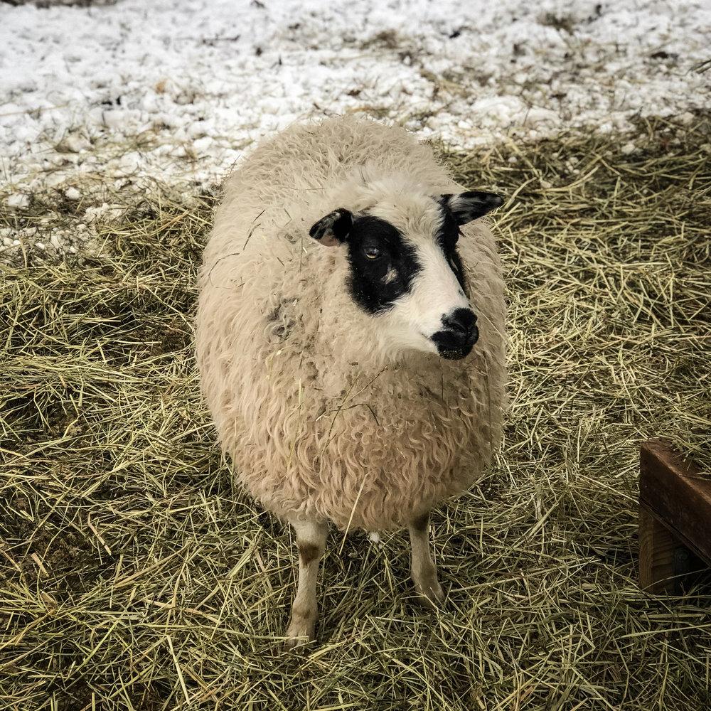 winter animals-4.jpg