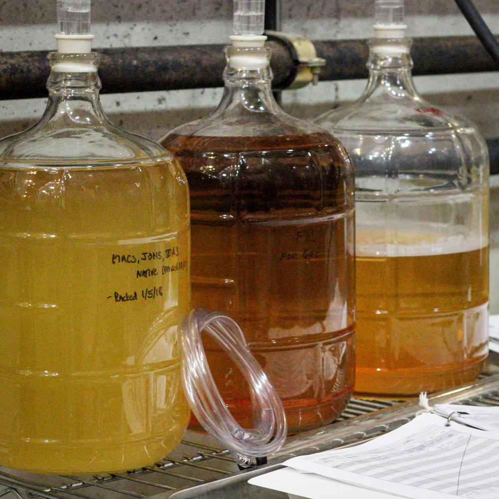 small batch cider trials.jpg