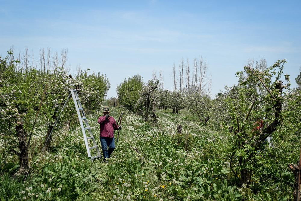 overhiser orchards-11.jpg