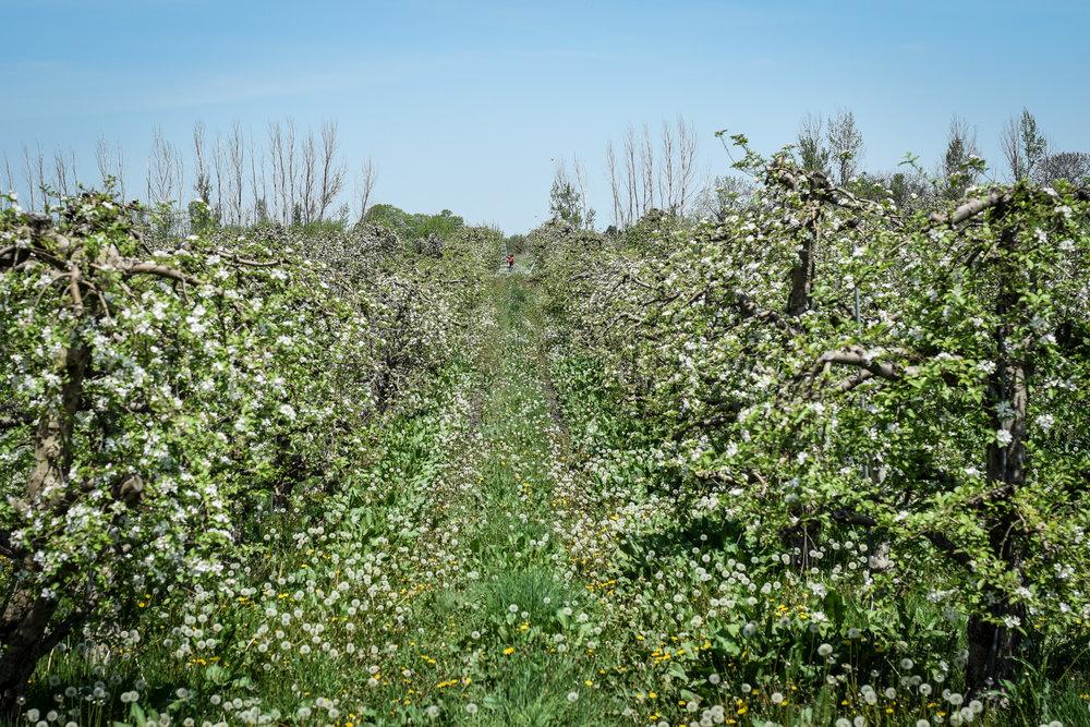 overhiser orchards-12.jpg