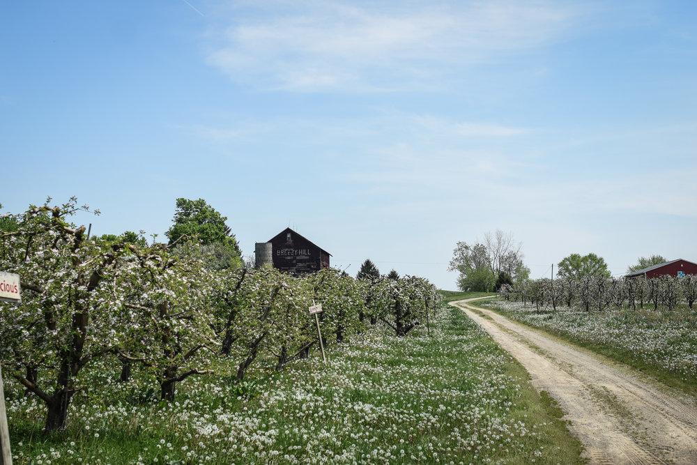 overhiser orchards-10.jpg